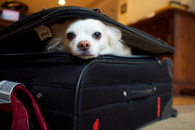 Goboony don't forget blog dog in suitcase