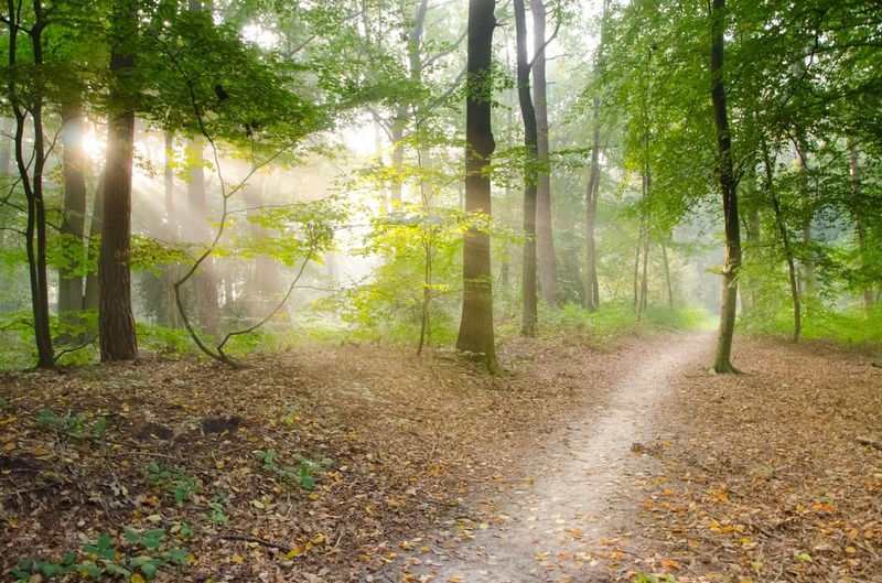 Scenic walks on the Knapzaproutes are a must do if visiting the Netherlands on a road trip