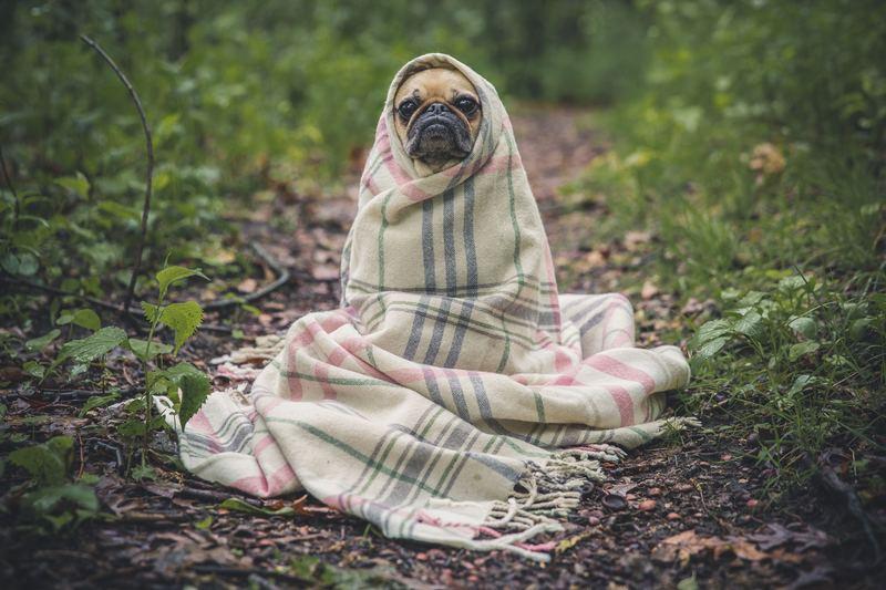 Goboony huisdieren verkeersregels Frankrijk hond
