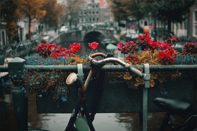 Goboony Amsterdam Bike Canal