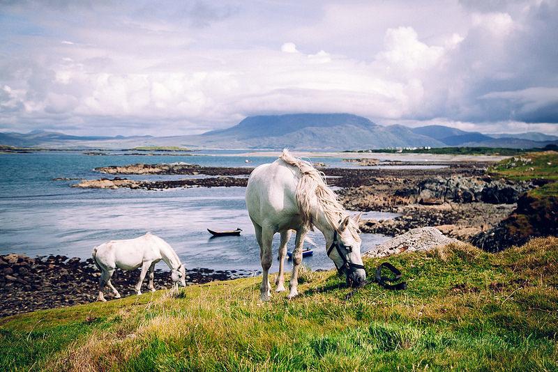 Goboony_Irlanda