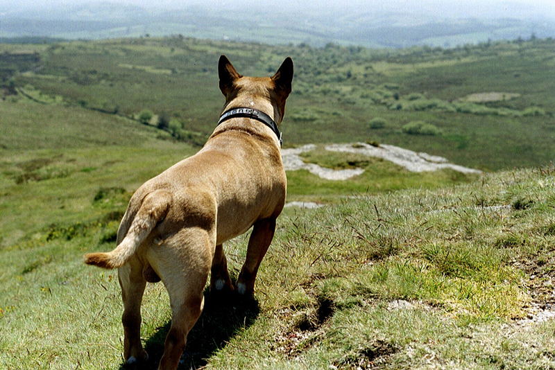 Goboony visit Dartmoor bring your dog camping