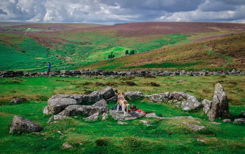 Goboony Visit Dartmoor walking stone circles moor