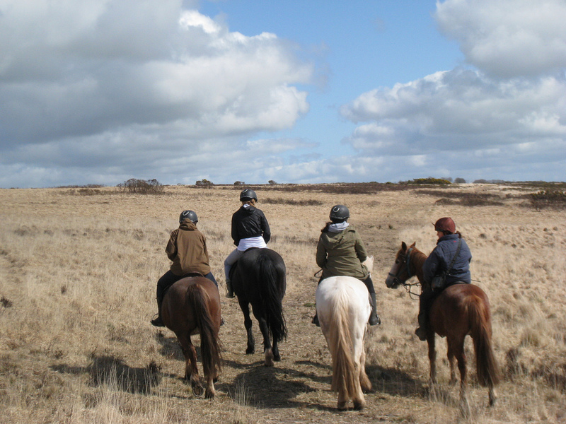 Goboony Visit Dartmoor Horse riding moor Devon