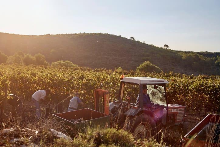Goboony met de camper naar Luxemburg wijnroute