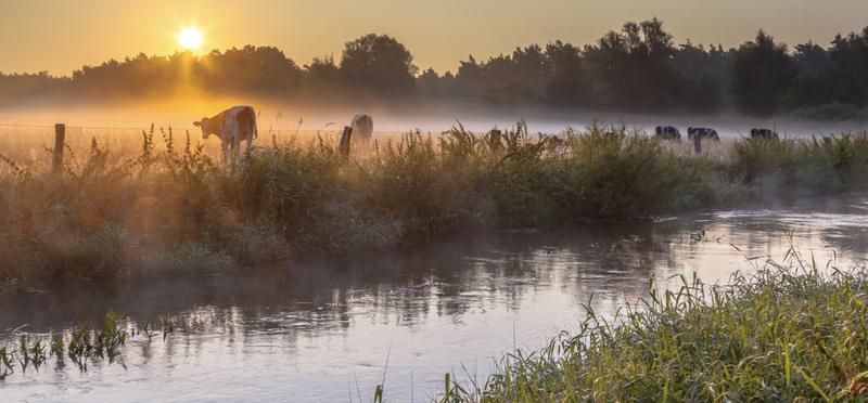 Goboony camperplaatsen Overijssel koe
