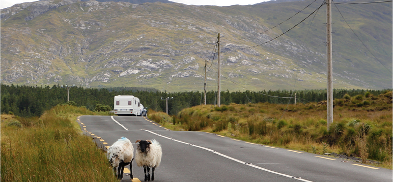 Goboony Ireland H2 Sheep NorthernIreland Mountain Campervan