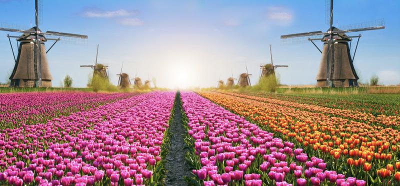 Goboony Netherlands H2 Keukenhof Tulip Fields