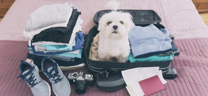 Goboony Motorhome Holidays H2 Dog Suitcase Packing Trip