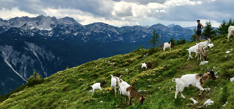 Goboony Visit Slovenia H2 Mountain Goat
