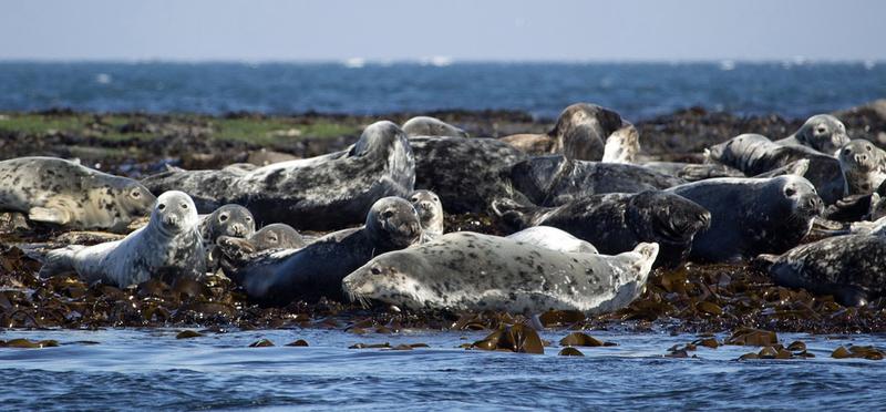 goboony Seals Coast H2 Northumberland