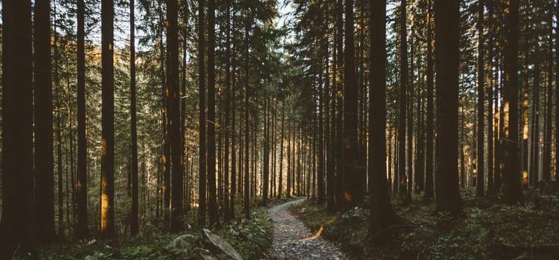 Goboony met de camper naar Polen bos