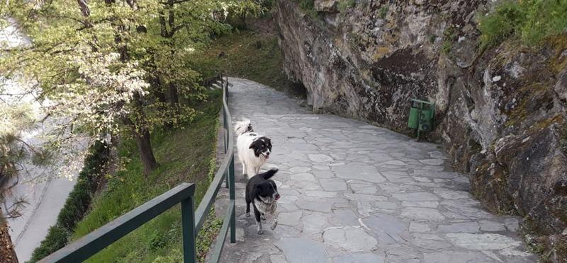 Goboony Guus en Sandra Bosnië hondjes