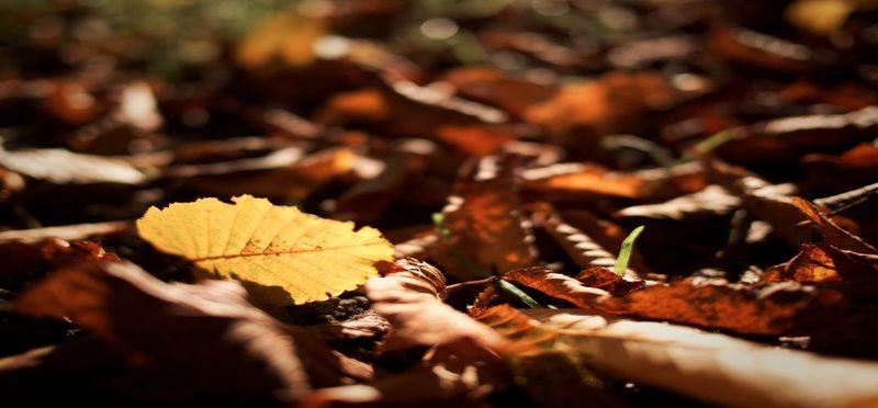 /content_autunno_2.jpg