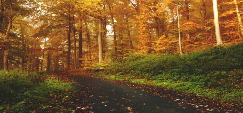 /content_autunno_3.jpg