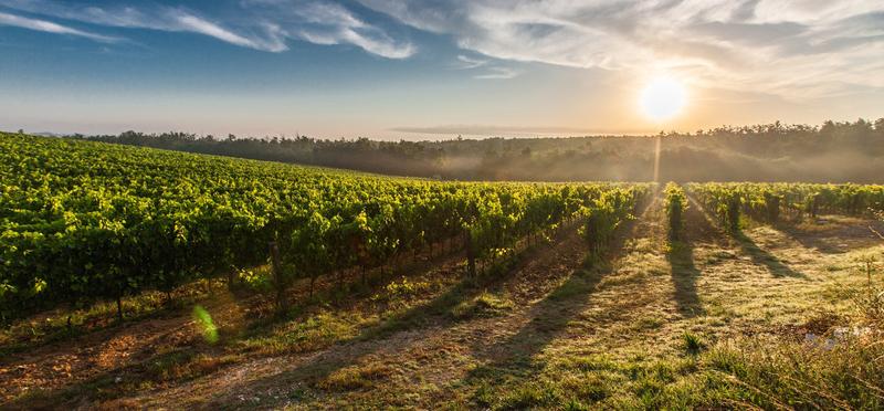 goboony piemonte in camper vino degustazione