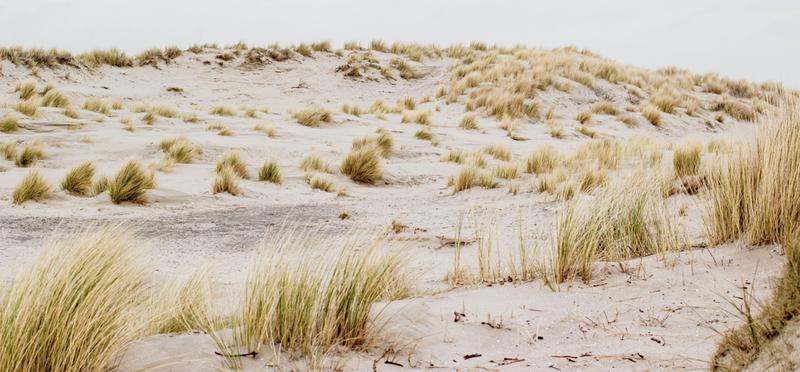 Goboony mooiste stranden Zeeland Oostkapelle