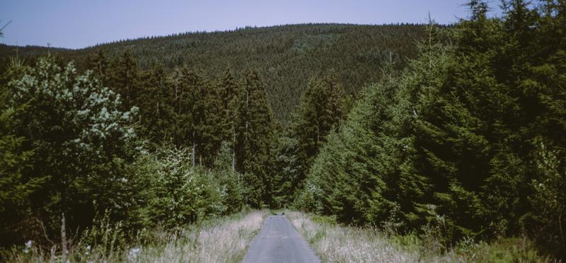 Goboony Mooie Natuur Belgie Haute-Sûre Forêt d'Anlier
