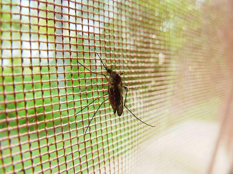 tips tegen muggen plaats een hor in je camper