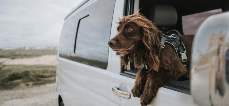 Goboony dog campervan camper pet h2 puppy travel