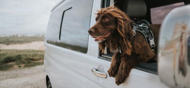 Goboony campervakantie met je hond