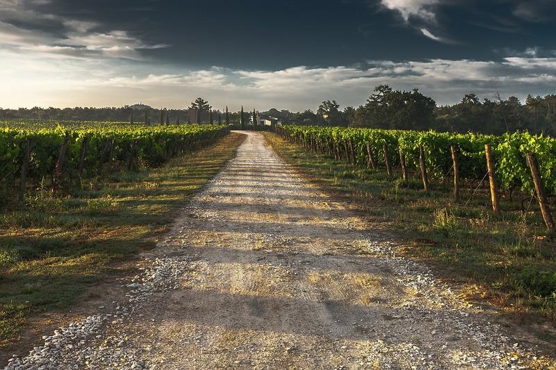 Op vakantie met de camper in Italië wijngaard