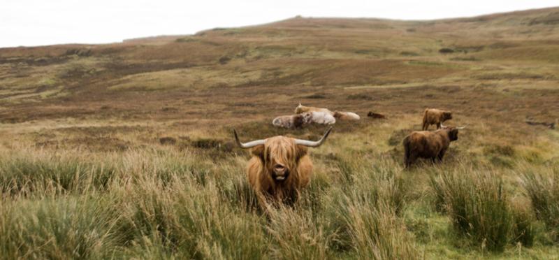 Goboony Isle of Skye Scotland H2 Travel