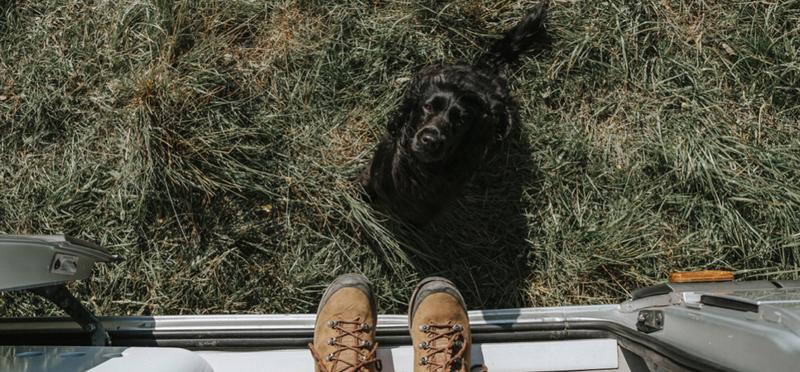 Goboony dog campervan travel h2 motorhome pup camping