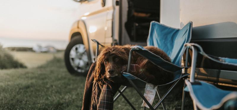 Goboony dog campervan motorhome h2 camping pup travel