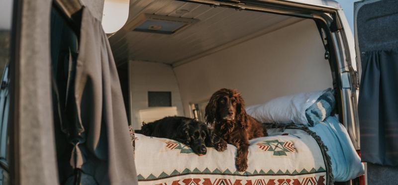 Goboony motorhome dog campervan travel h2 pup camping