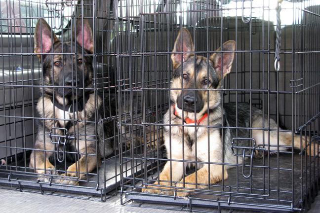 Hund sicher in der Box im Campingurlaub