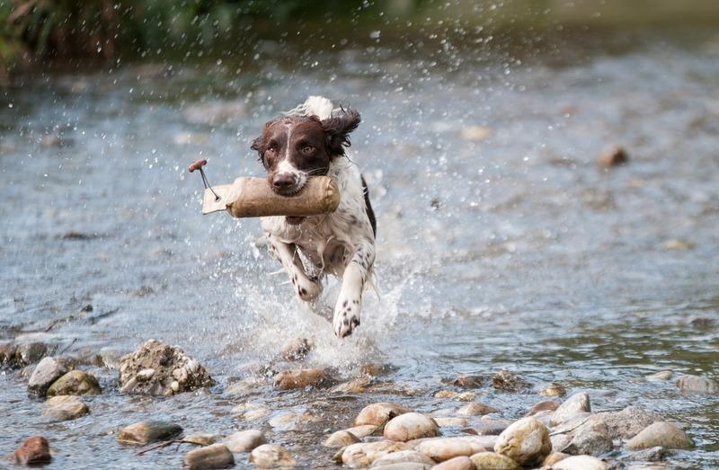 Abkühlung für den Hund im Campingurlaub