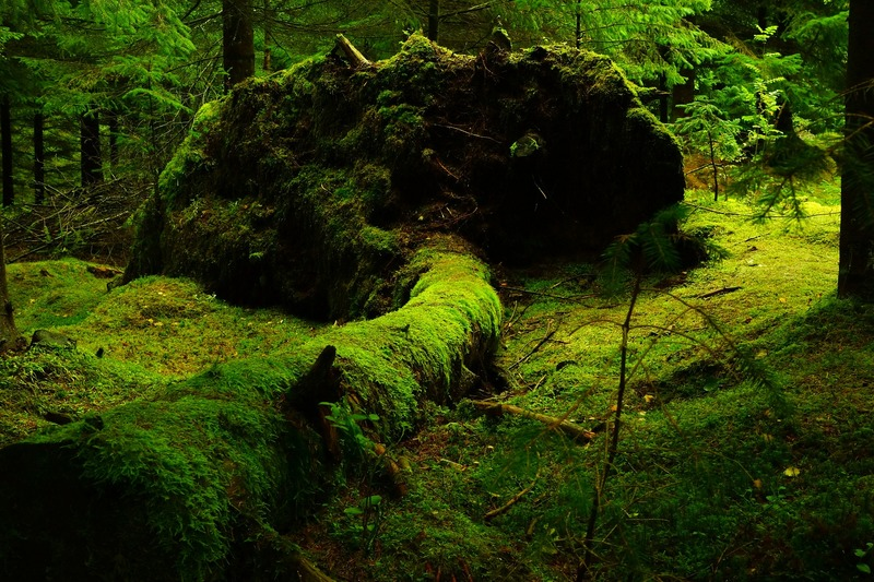 Norvegia la natura incontaminata