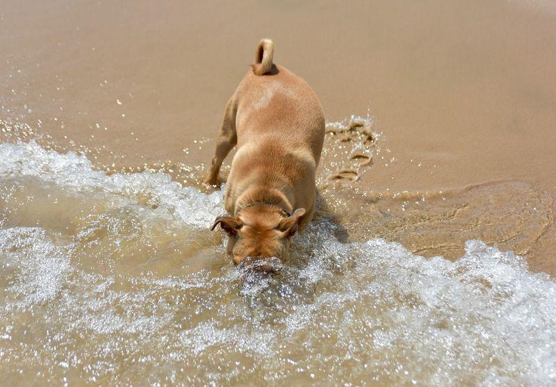 Overwinteren in Spanje met de camper en je hond