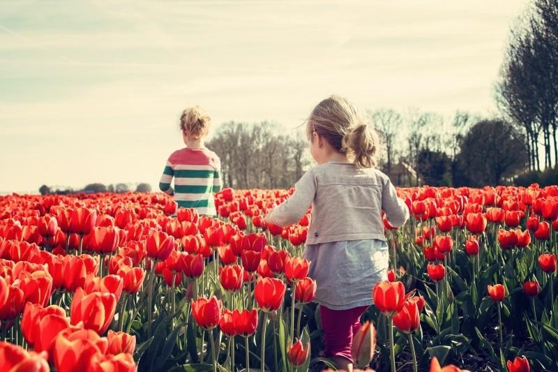 children in tulip field