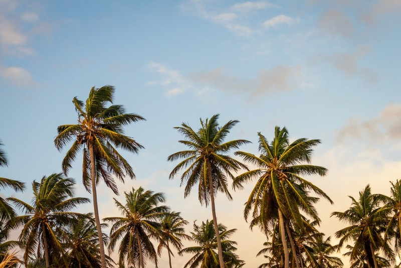 Goboony camper uit stalling checklist summerproof palmboom