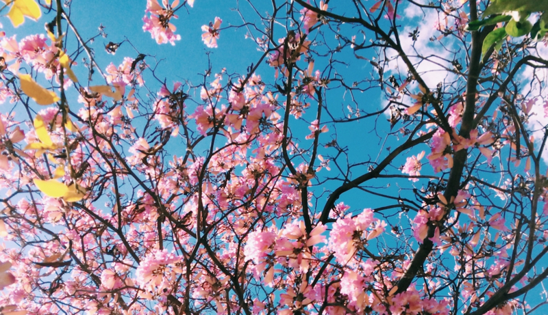voorjaarsvakantie