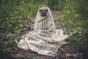Mit dem Hund im Campingurlaub