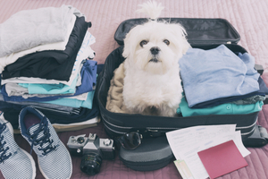 7 Most Commonly Forgotten Things to Pack for a Motorhome Trip