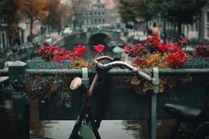 Amsterdam in Camper