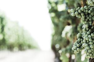 Top 5 English Vineyards to Visit